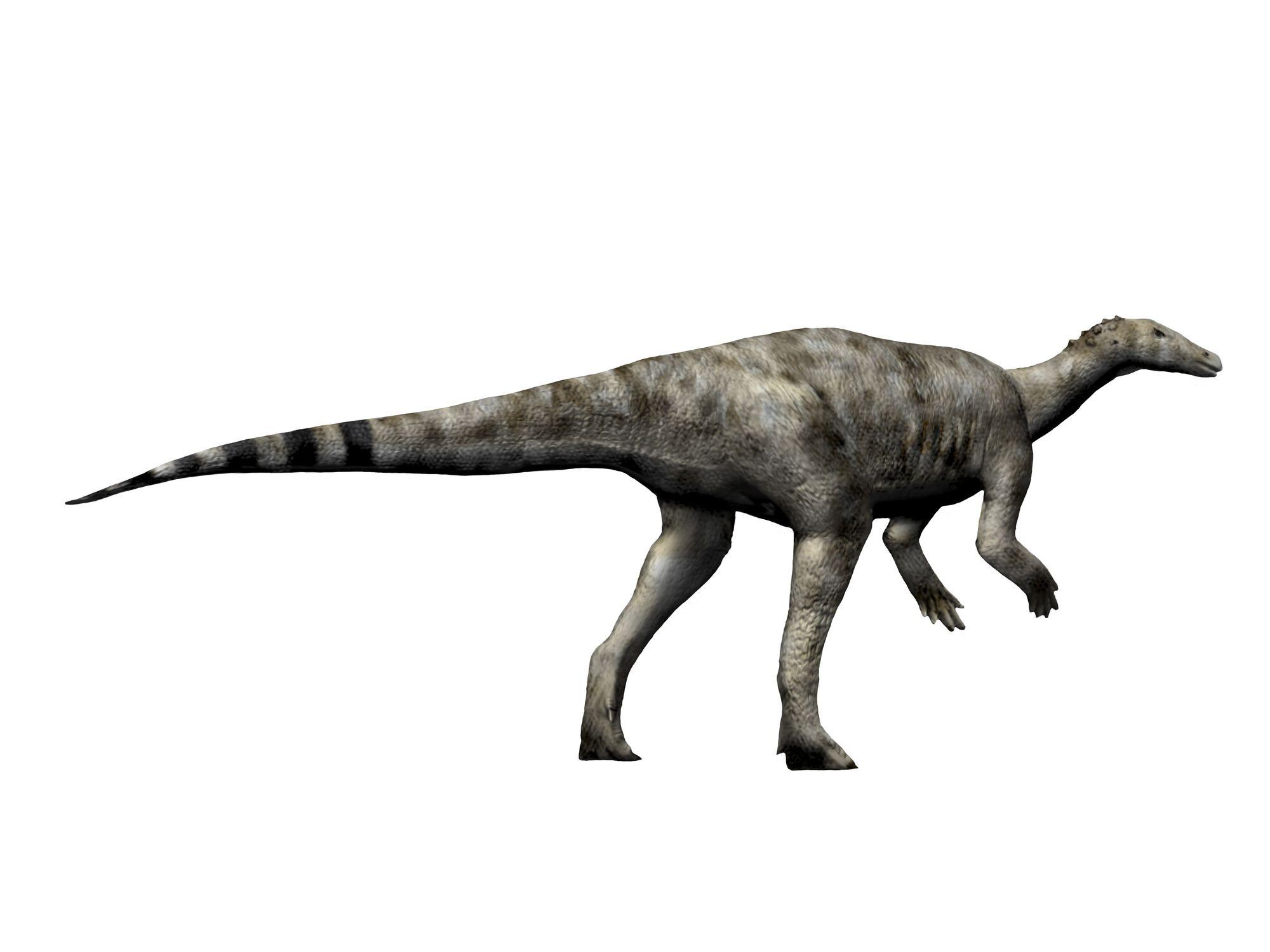 Thescelosaurus dinosaur, white background.
