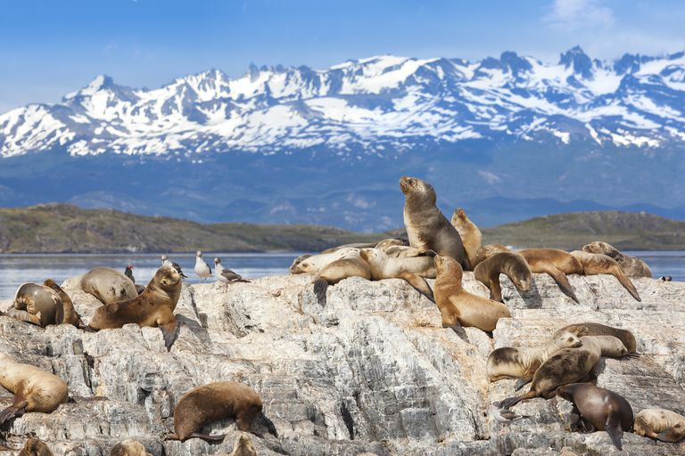 Argentina Ushuaia sea lions on island at Beagle Channel