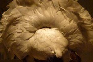 Elaborate Feather Headdress worn by Llullaillaco Maiden