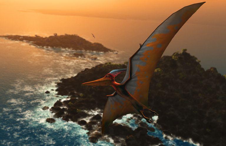 pteranodon in flight