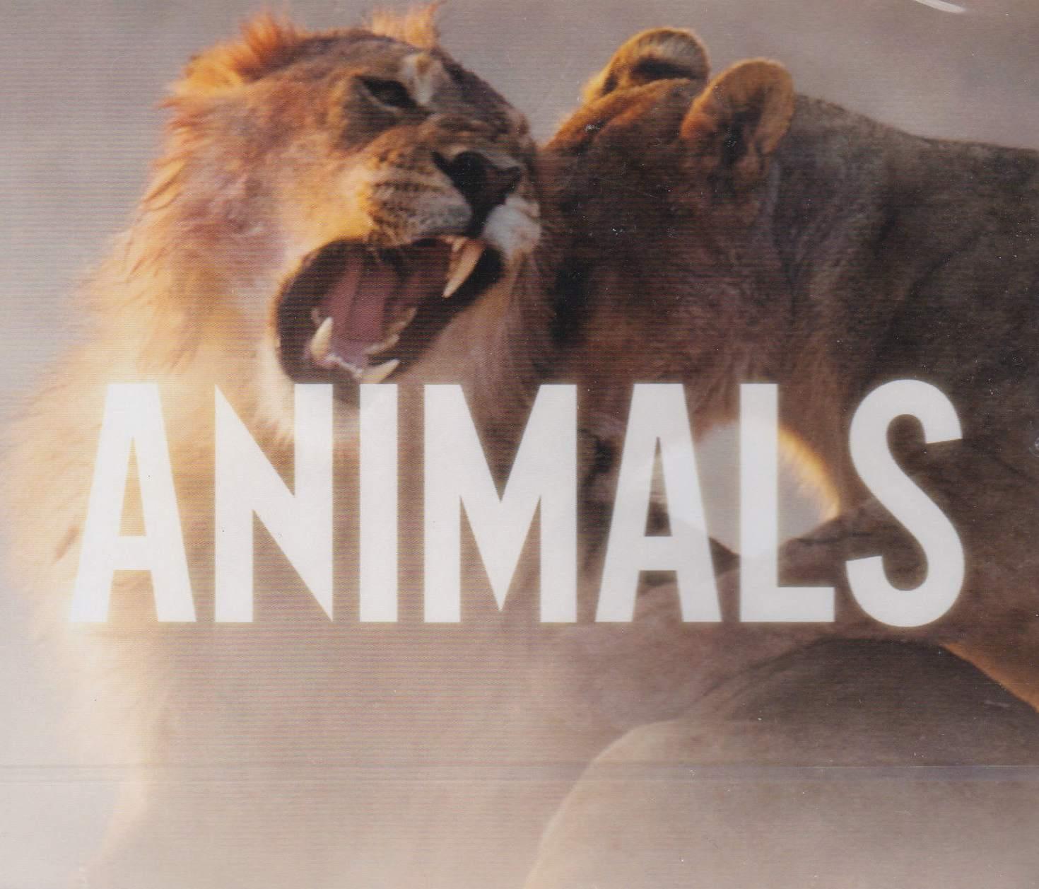 Maroon 5 – Animals Download & Streaming - MusicPleer