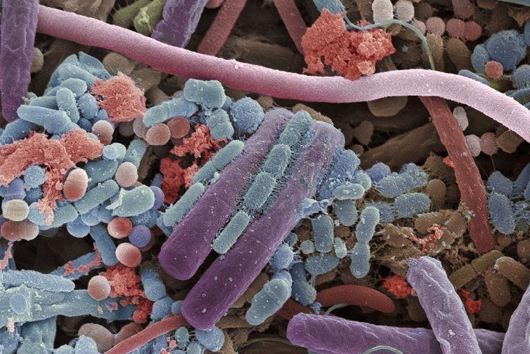 Tongue Bacteria