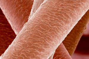 microscopic view of human hair