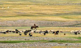 Traditional Mongolian Herder. Khangai mountains