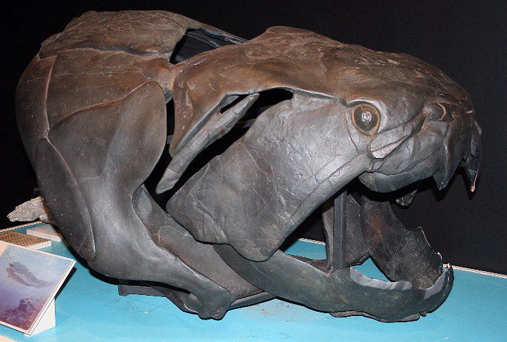 dunkleosteus facts and figures