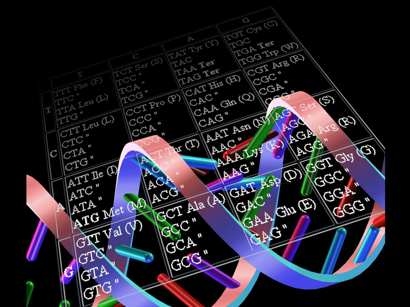 Genetic Code And Rna Codon Table