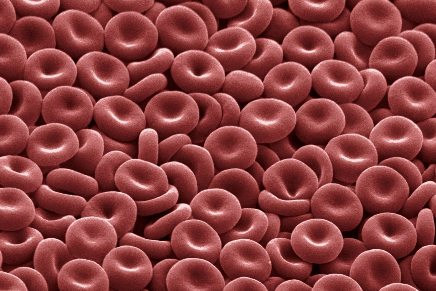 Red Blood Cells: Function and Structure