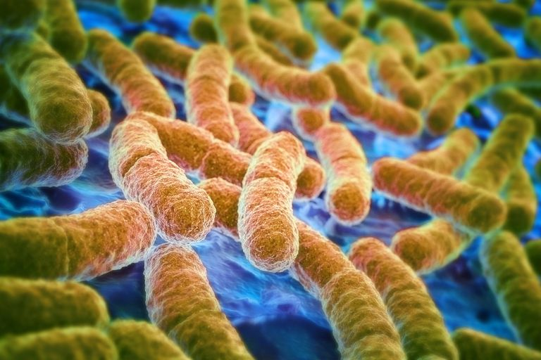 Escherichia coli, also known as E. Coli, is the most extensively studied prokaryotic organism.