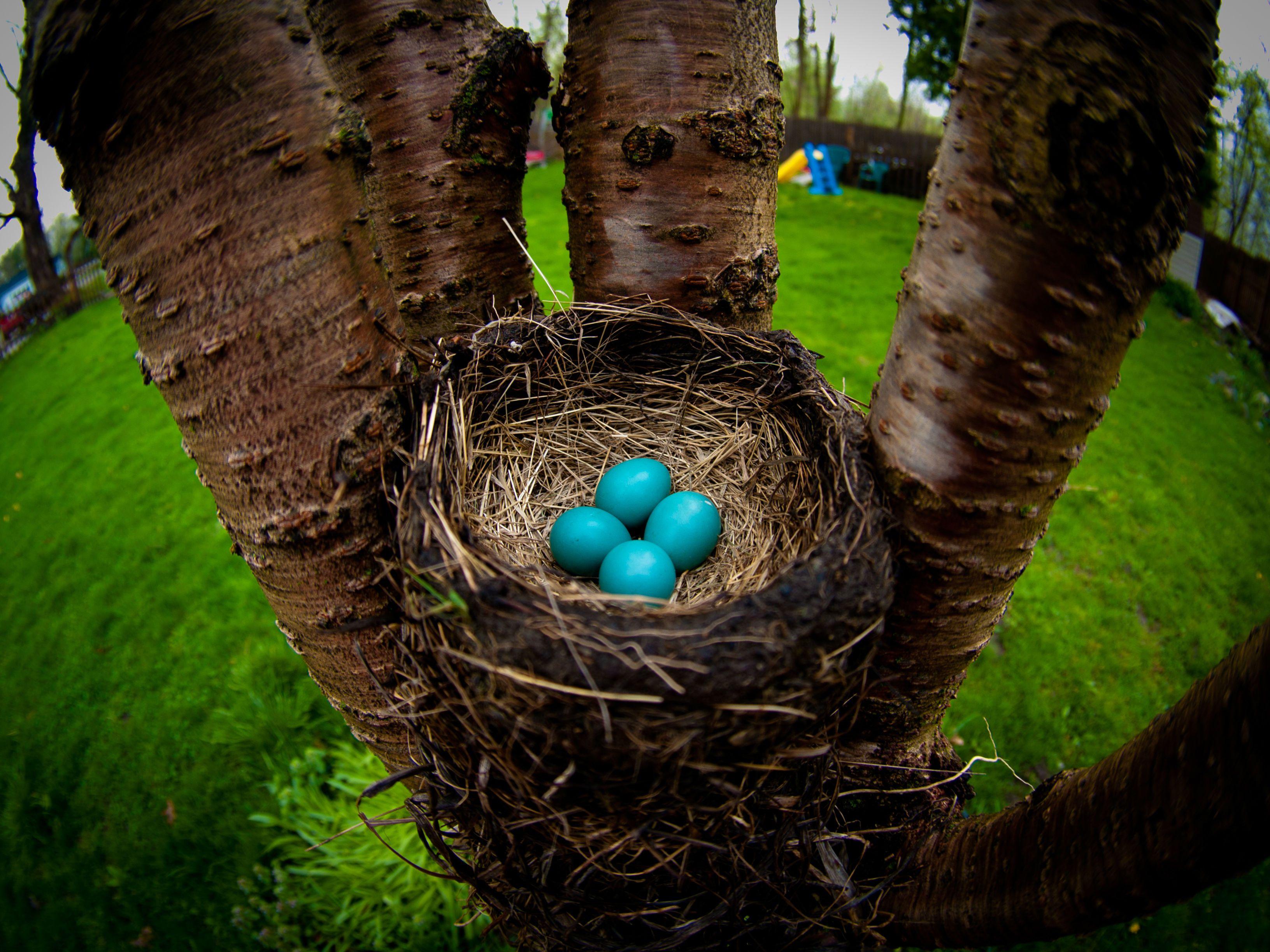 How To Identify A Bird Nest