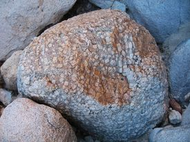 California tree megacryst; Rattlesnake Canyon