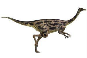 Gallimimus dinosaur.