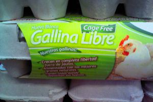 Using the Spanish word libre