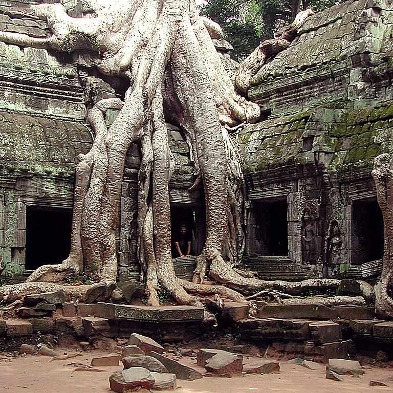 Huge tree in Angkor Wat, Cambodia