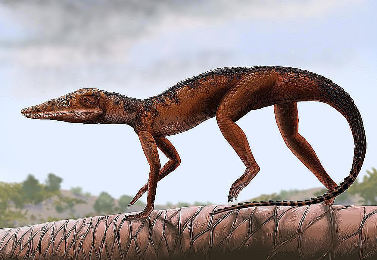 8468346c5 Prehistoric Crocodile Evolution