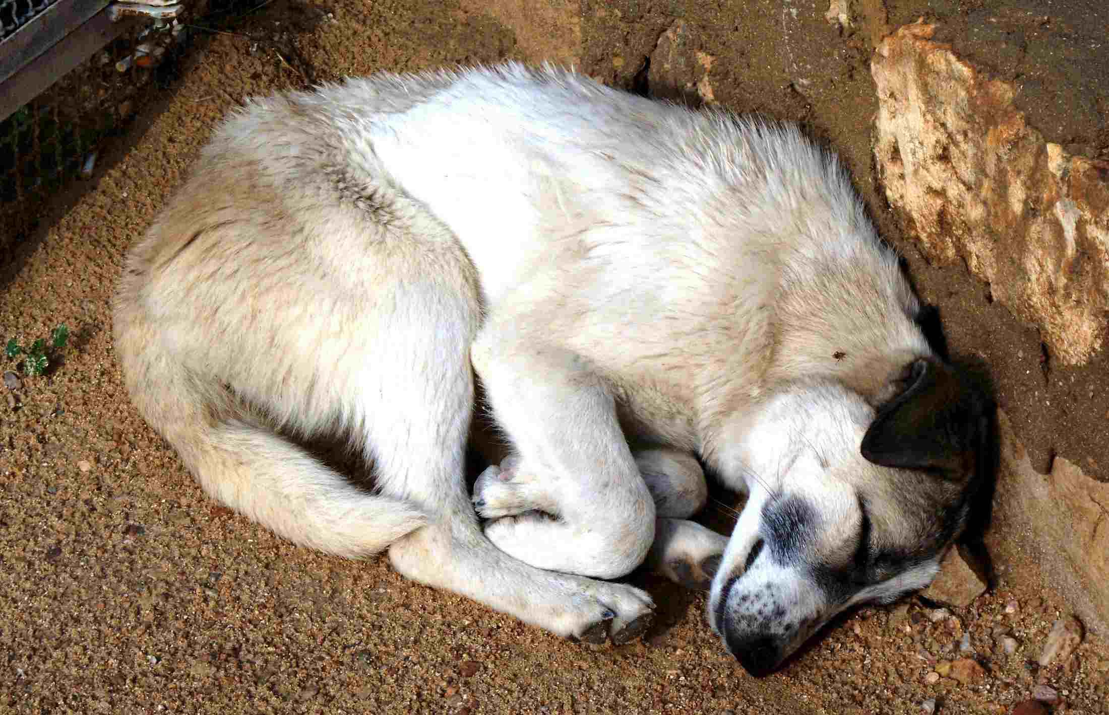 A dog sleeping on the ground
