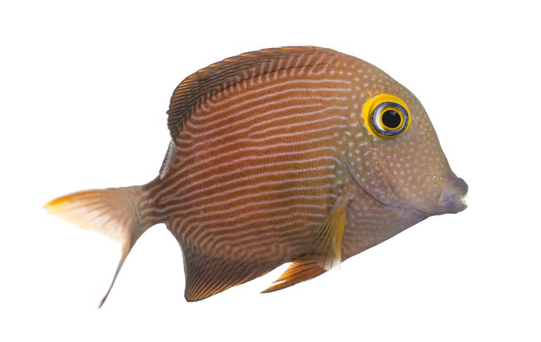 10 Essential Facts About Fish