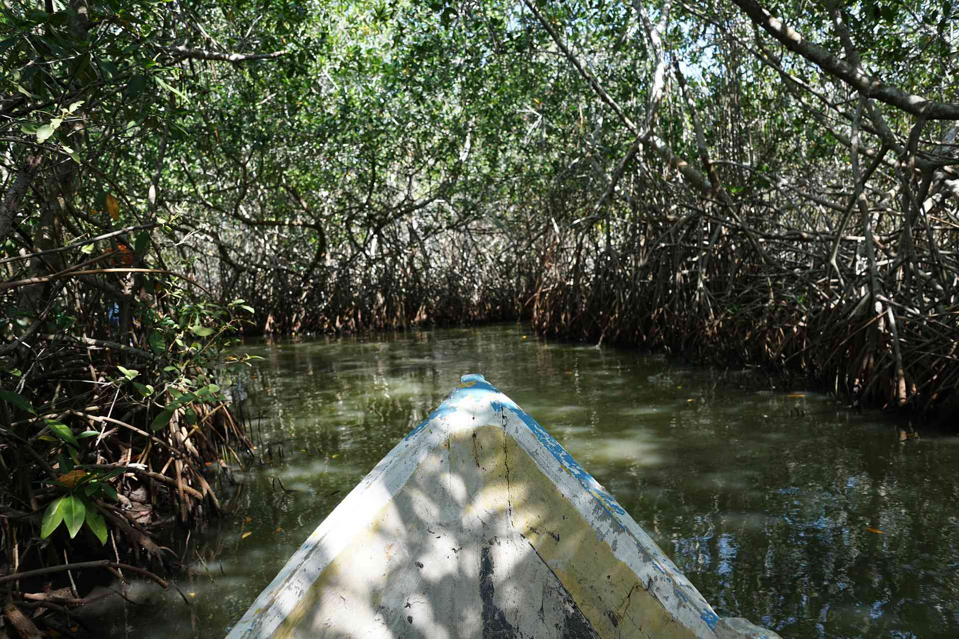 First person photo of a mangrove forest as seen from a small boat.