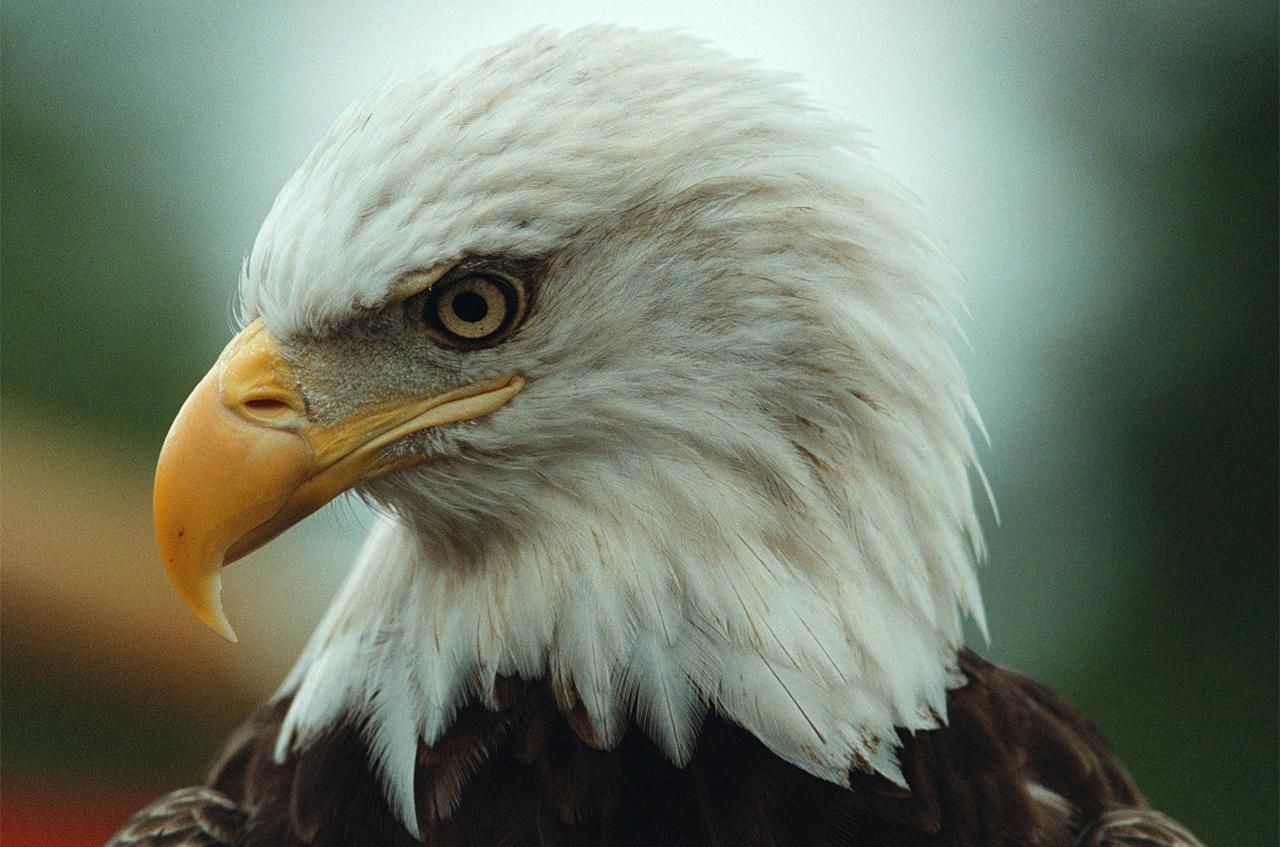 what is the endangered species act?