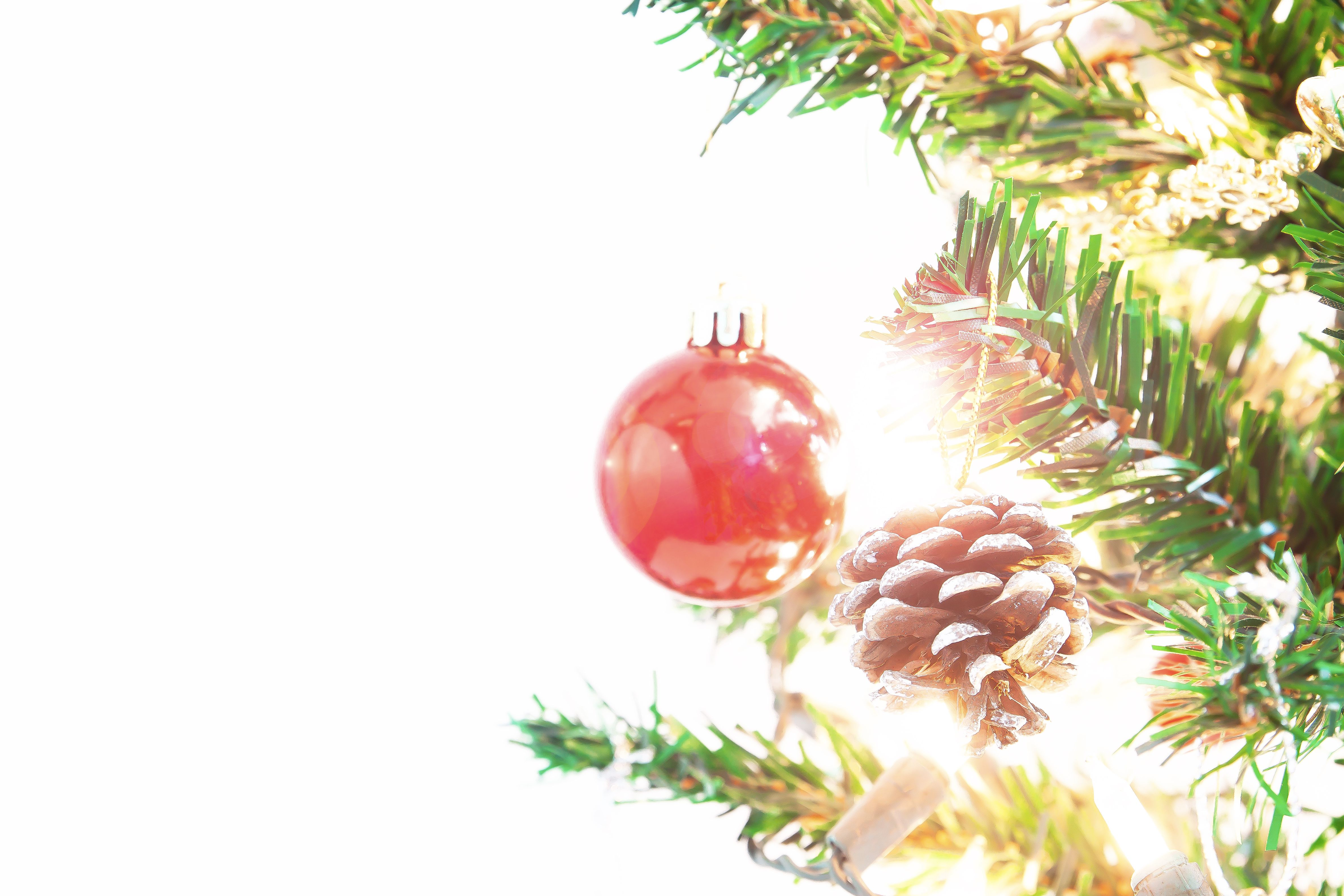 Can Pagans Have Christmas Trees?