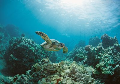 What Is A Marine Ecosystem