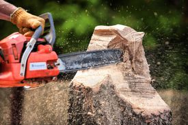 Man Sawing Tree with chainsaw