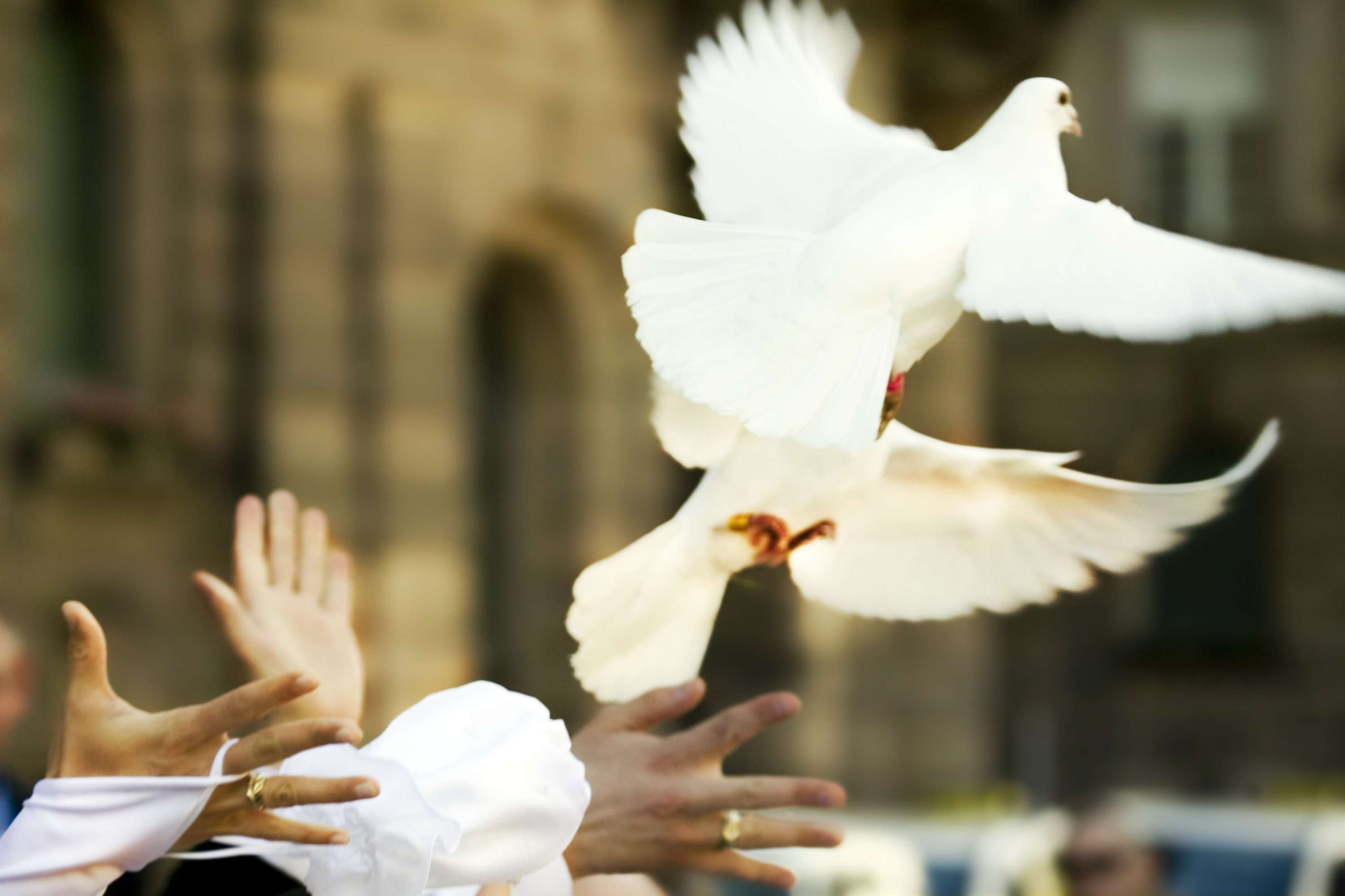 People releasing white doves into the air