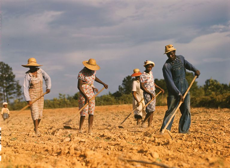African American sharecroppers working in the field.