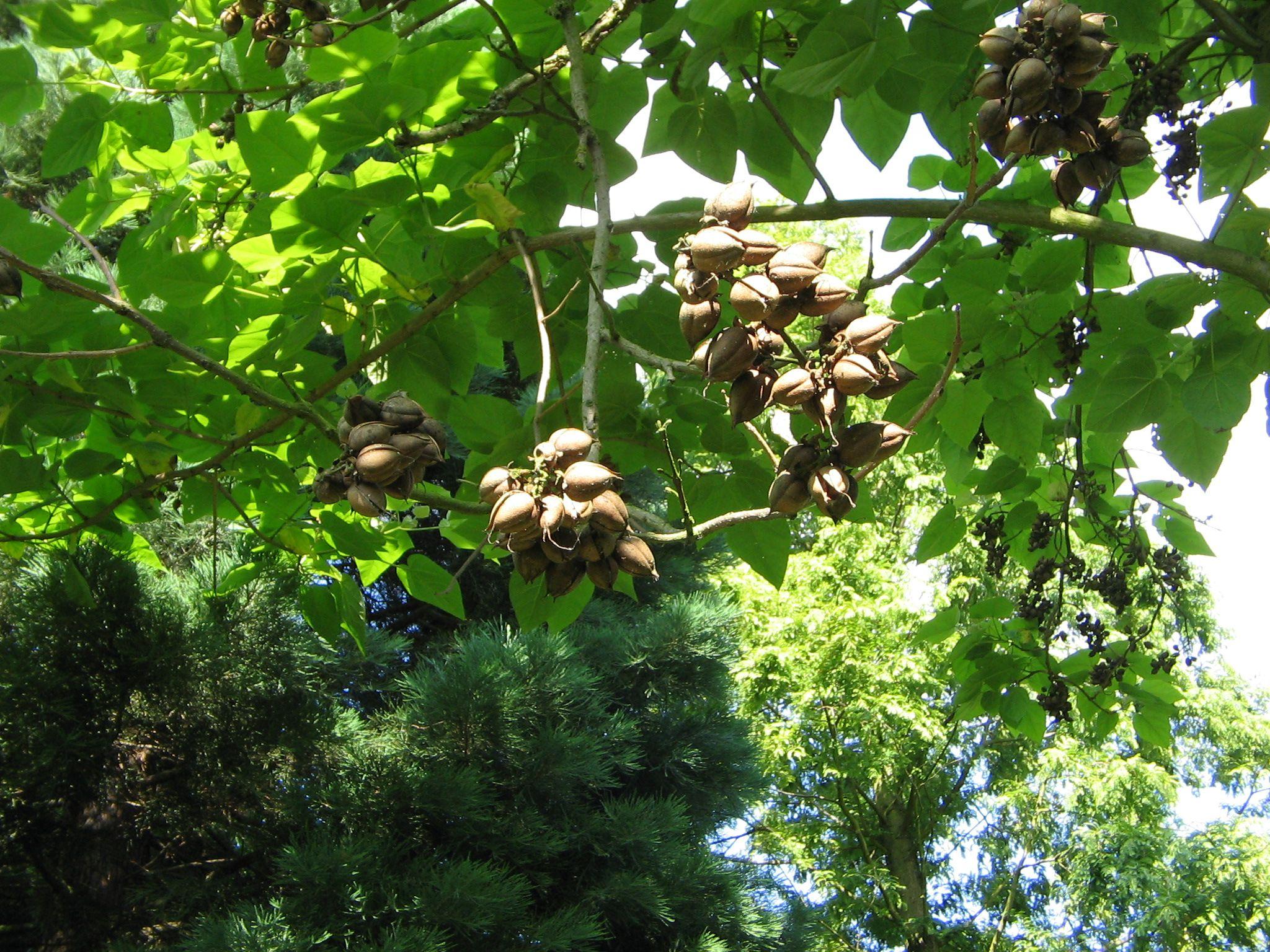 Common North American Hardwood Trees