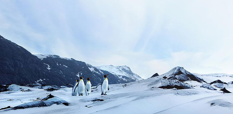 Penguins on Winter Tundra