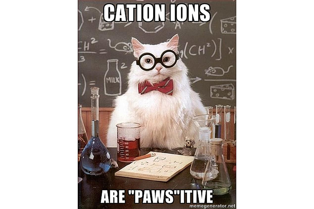 Chemistry Cat is positive about cations.