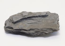 Shale is a common sedimentary rock, known for flaking into sheets.