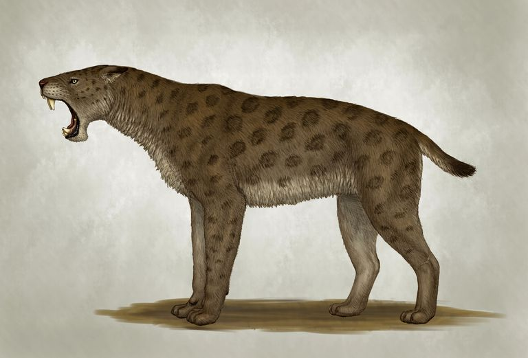Homotherium latidens, a big sabertooth cat of the Pliocene Epoch