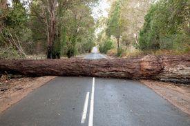 big tree fallen in the road