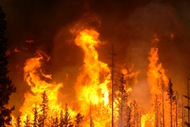 A forest fire rages in the U.S. Pacific Northwest