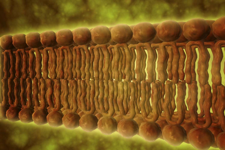 Microscopic view of phospholipids.