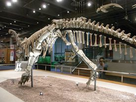 HK TST Science Museum Bones exhibit 02 恐龍 dinosaur