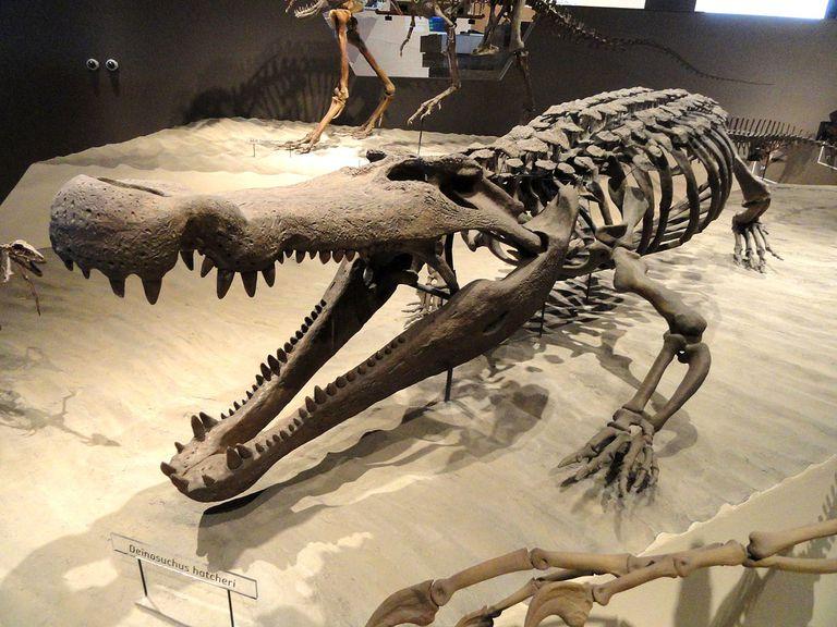 deinosuchus fossil