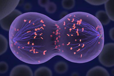 chromosome sex cells in Colorado