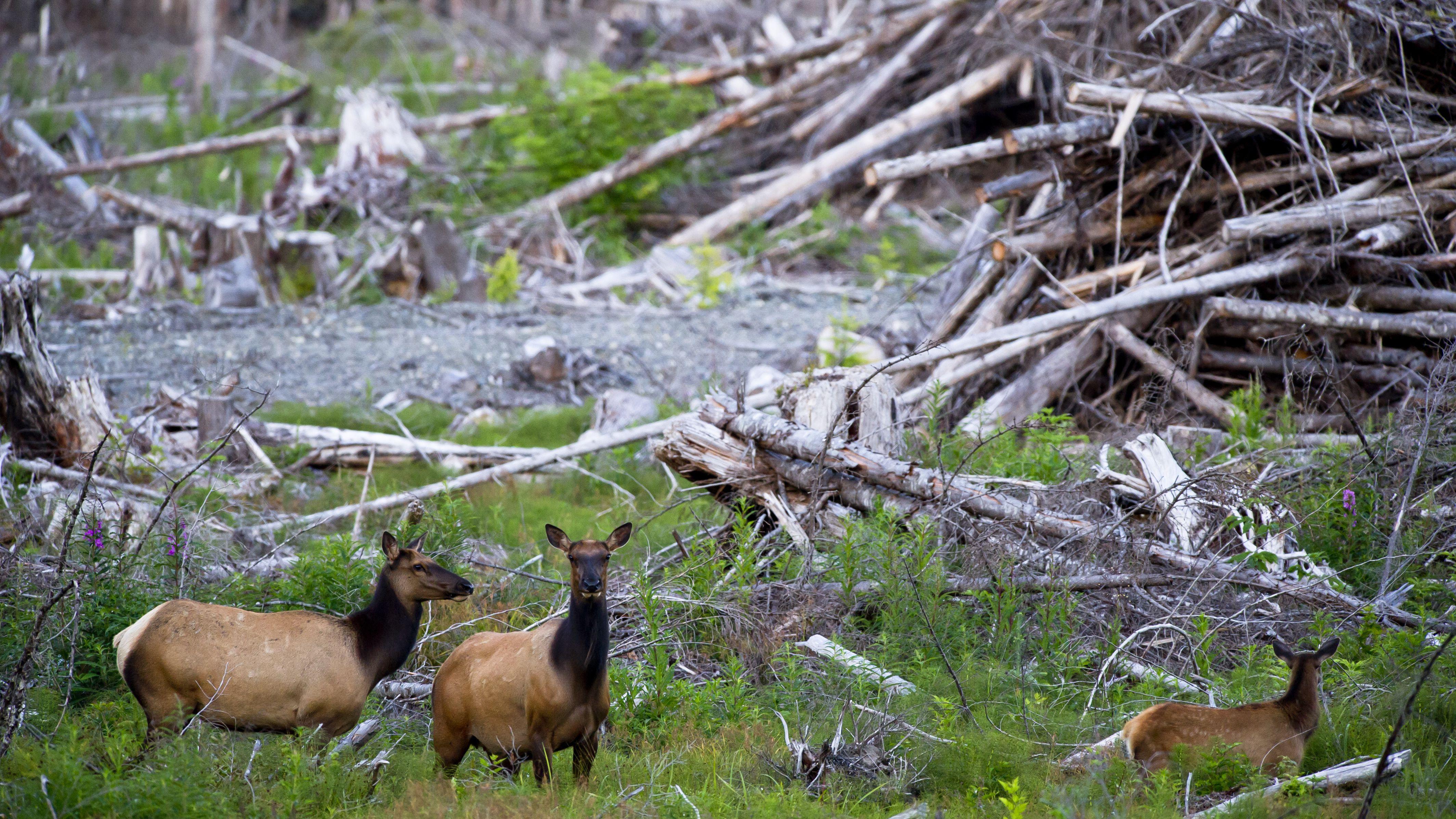 Habitat Loss, Fragmentation, and Destruction