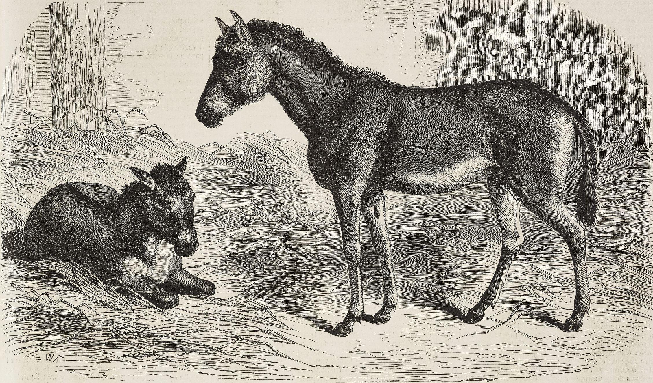 10 Recently Extinct Horse Breeds