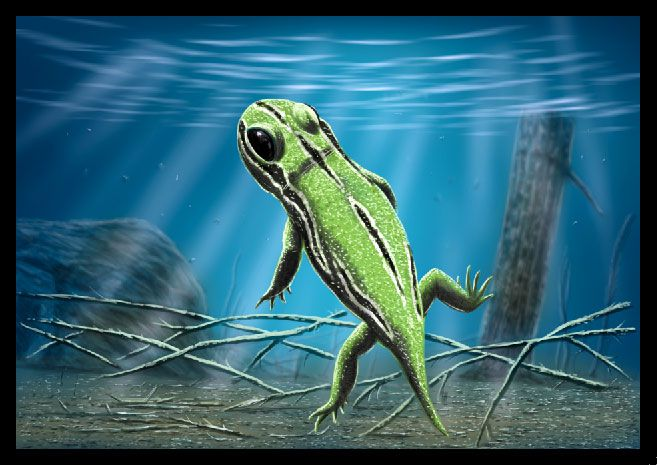 amphibamus