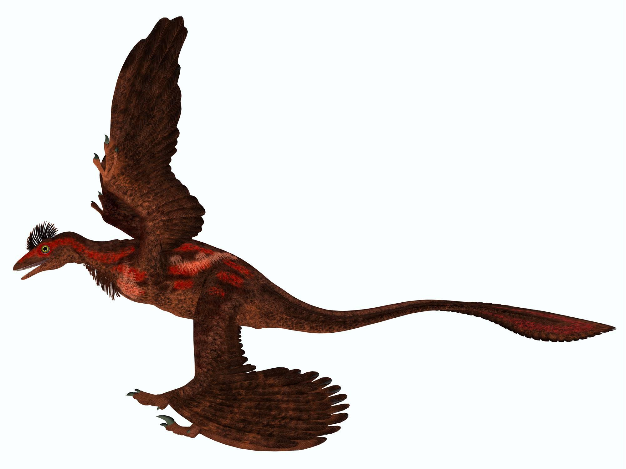 Memenuhi Raptor Dinosaurus Dari Era Mesozoic