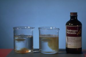Bottle of hydrogen peroxide next to two beakers filled with water
