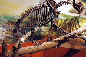 Smilodon Saber-Tooth Tiger