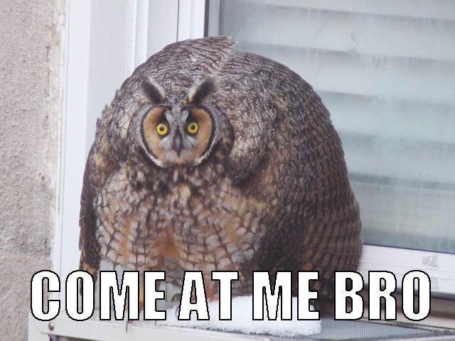 Adorably Sinister Owl Memes Beat Cat Memes Any Day