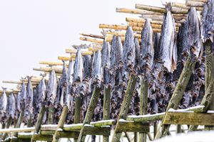 Stockfish on Wood Racks