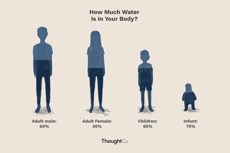 How Much Of Your Body Is Water What Percentage