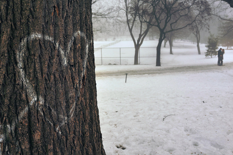 A heart written on a tree