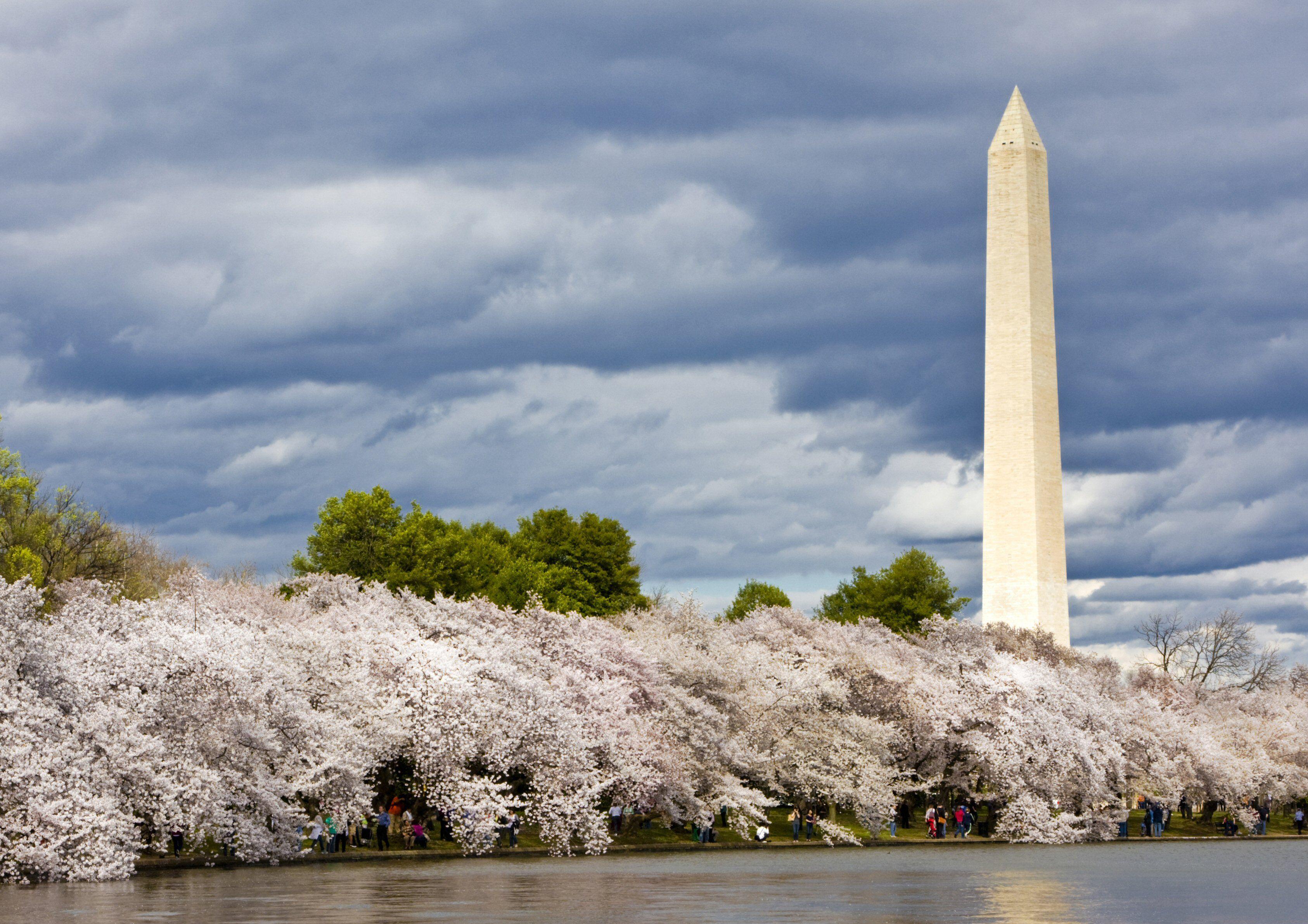 Washington Monument and Cherry Blossoms around Tidal Basin, Washington, DC