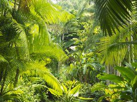 Interior of a rainforest, Malaysia.